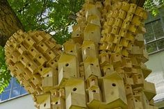 casas para passarinhos...