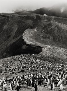 Sebastião Salgado, Chinstrap Penguins, Bailey Head, Deception Island Genesis series, 2005