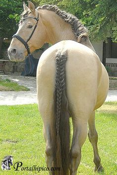 Amazing braided tale of this Horse. cool!