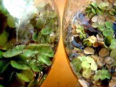 vida vegetal microscopica - Buscar con Google
