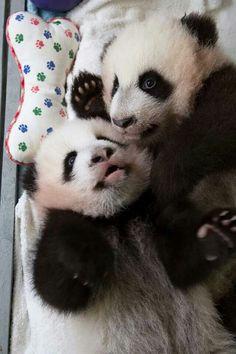 Mei Lun & Mei Huan at Atlanta zoo