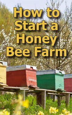 How to Start Beekeeping in Your Backyard - Backyard Beekeeping Start a Honey Bee Farm