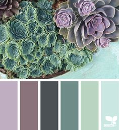 Purple | Color Palette | Green | Succulent Garden | Relax | Peaceful | Mood Board | Design Inspiration