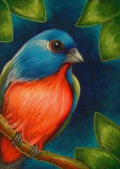 Painted Bunting by Cyra R. Bird Paintings On Canvas, Oil Pastel Paintings, Oil Pastel Art, Oil Pastel Drawings, Easy Canvas Painting, Watercolor Paintings, Art Drawings For Kids, Bird Drawings, Painted Bunting
