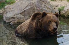 Bären: Zoom Erlebniswelt Gelsenkirchen