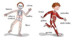 """Los huesos y los músculos """"segundo grado""""                                                                                                                                                                                 Más"""