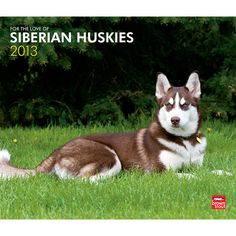 For the Love of Siberian Huskies Wall Calendar: A native of Siberia, Huskies were bred as sled dogs and brought to Alaska in 1909. They love to run and value the company of people and other dogs.  $15.99  http://calendars.com/Siberian-Huskies/For-the-Love-of-Siberian-Huskies-2013-Deluxe-Wall-Calendar/prod201300004642/?categoryId=cat10167=cat10167#