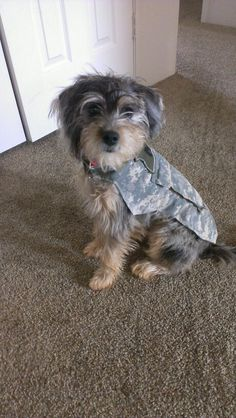 Chico is getting this outfit! Camo Stuff, Dog Stuff, Camo Crafts, Dog Outfits, Doggie Treats, Animal Projects, Camo Jacket, Diy Dog, Yorkies