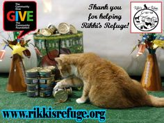 Your ‪#‎GIVE15‬ donation helps me buy fancy feast for me and all 600 of my kitty friends here at Rikki's Refuge. Then there is the hay and feed for the horses, cows, sheep, donkeys, goats and bunnies. Veggies, fruit, cracked corn and feed for the emus, geese, ducks, guinea pigs, pigeons, guinea fowl, chickens, turkeys, our swan and our resident pheasant. Grub for all the big pigs. Noms for our dogs! Can you help me help them? Opie xoxoxo  https://www.thecommunitygive.org/#npo/rikkis-refuge