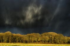 Taken during a very heavy storm. The clouds behind me broke to bathe the trees in sunshine creating this contrast.