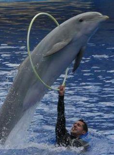 dolfijn door hoepel -