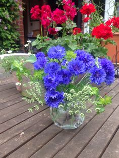 Cornflower, Ammi & Bupleurum. June 19th posy. All Autumn sown.