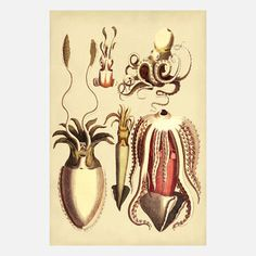 $21 Adams Ale Art: Cephalopods 12x16, at 13% off!