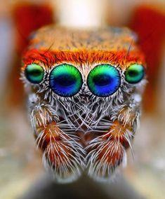 Super coole macrofoto van een spin