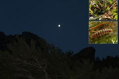 https://flic.kr/s/aHsktRPWWR   151 Fenced In   Ill Met by Moonlight as we get Fenced In during this week's #CreteNature trek in the wilds of the 40 Saints: bit.ly/40saintsIII