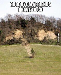Run Forest Run! - 9GAG