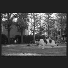 Taro April 2014 #cat #blackandwhitephotography
