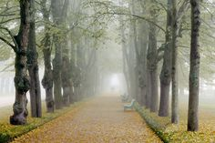 Misty alley by Vladimir Mironov on 500px