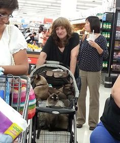 Strolling with a Stroller Full of Siamese Cats at Walmart!!! - Funny Pictures at Walmart