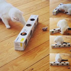 Cat toy. An empty box, a few holes, a mouse, 2-3 balls and snacks. Let the fun begin! #cat #game #diy