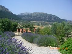 the lavender garden leading down to the stables and horse paddocks