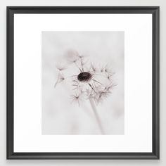Dandelion Dream Framed Art Print