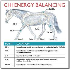 Chi Energy Balancing - Equine Acupressure