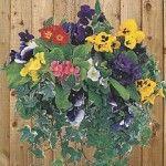 Flower options for a Winter Hanging Basket. Flower options for a Winter Hanging Basket.
