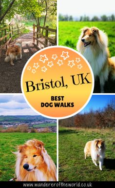 If you're looking for the best dog walks in Bristol (and near Bristol) then let us share with you these ten walks that we hope you and your dog will love! Great Buildings And Structures, Modern Buildings, Dog Travel Accessories, Road Trip With Dog, Bristol England, Dubai Skyscraper, River Park, Road Trip Essentials, Travel Couple