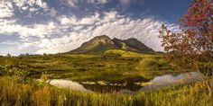 Helderberg Nature Reserve - Somerset West - a wonderful venue for bird watching and hiking - Western Cape - South Africa by Bryn De Kocks. Cape Town Tourism, Somerset West, Like A Local, Most Beautiful Cities, Nature Reserve, Amazing Nature, Live, Places To See, South Africa