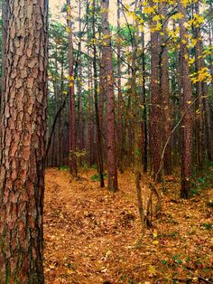 Shawnee National Forest, Plants, Plant, Planets