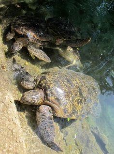 Viaggio a Zanzibar: Prison Island e Stone Town, tra dhow e tartarughe giganti (2 parte) | Non Solo Turisti
