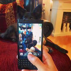 #inst10 #ReGram @jenappsi: Black beauties  #merlin #dog #dogpics #blackberrykeyone #blackberrykeyoneblackedition #shotonkeyone #blackberrylifestyle #teamblackberry #blackberrygirl #picoftheday #blackberry