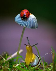 Ladybug (Ladybird) on toadstool or mushroom & Snail Beautiful Creatures, Animals Beautiful, Cute Animals, Animals Sea, Beautiful Bugs, Amazing Nature, Cool Bugs, Bugs And Insects, Tier Fotos