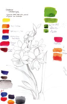 How to paint botanicals in watercolour – PART ONE