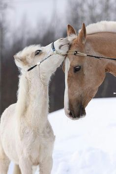A mother and her baby is the best thing you'll ever see and it will be even better if it is a horse-Molly