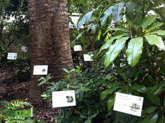 Creación de Jardín Botánico mediante placas de identificación de especies vegetales con códigos QR.