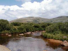 Bierstadt Creek [Mt. Bierstadt 14-er hike, summer bucket list]
