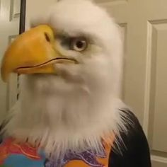 Super Funny Videos, Funny Animal Videos, Funny Animals, Cute Animals, Mode Halloween, Halloween Art, Halloween Costumes, Funny Halloween, Eagle Mask