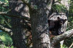 Bear Cub Calling