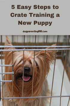 I know the thought of crate training can seem overwhelming, but with these 5 easy steps I've got you covered! #cratetraining #housetraining #trainyourdog Crate Training, Dog Training Tips, Pet Sitters International, Group Of Dogs, Pet Sitting, Pet Costumes, Dog Recipes, Dog Boarding, New Puppy
