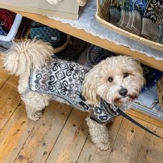 Jamieson & Smith (@thewoolbrokers) • Instagram photos and videos Photo And Video, Videos, Dogs, Photos, Animals, Instagram, Pictures, Animales, Animaux