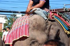 Here's Why You Should Never Ride an Elephant in Thailand   VICE News