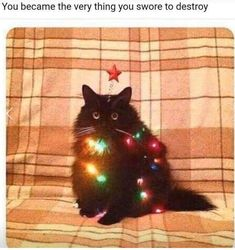 christmas memes 23 Holiday Animal Memes As A Forewarning Of Whats T… – Animals Cute Funny Animals, Funny Animal Pictures, Funny Cute, Cute Cats, Top Funny, I Love Cats, Crazy Cats, Cat Memes, Funny Memes