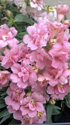 Baby Shower Centerpiece Ideas | Wholesale Flowers