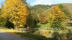 walking through the nature in autumn - Herbstspaziergang Walking, Country Roads, Autumn, Beautiful, Nature, Image, Nice Asses, Naturaleza, Fall Season