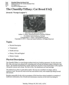 Chantilly Cat, Chantilly Tiffany, Interesting Information, Cat Breeds, Cats And Kittens, Long Hair Styles, People, Animals, Animales
