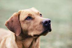 Nur 2 Elemente: Der Hund und der Hintergrund