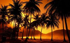 California Palm Trees Wallpaper High Definition with High Definition Resolution 1920x1200 px 873.50 KB