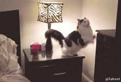catgifcentral: Good night everybody Cat GIF. Cute Funny Animals, Funny Animal Pictures, Funny Cute, Cute Cats, I Love Cats, Crazy Cats, Beautiful Cats, Animals Beautiful, Kittens Cutest